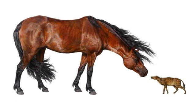 23horse-jumbo