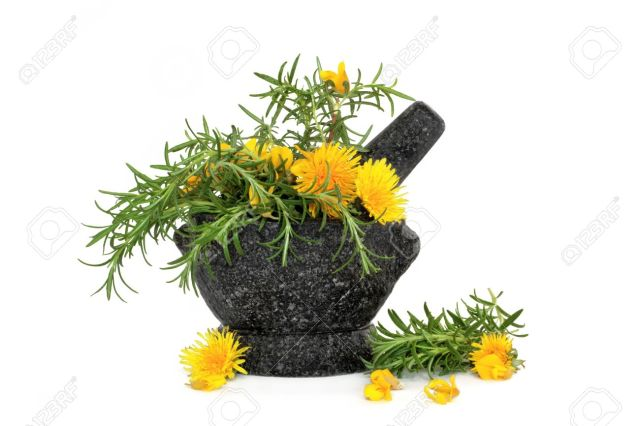 5723530-rosemary-herb-wild-dandelion-and-gorse-flowers-in-a-granite-mortar-with-pestle-isolated-over-white-b-stock-photo